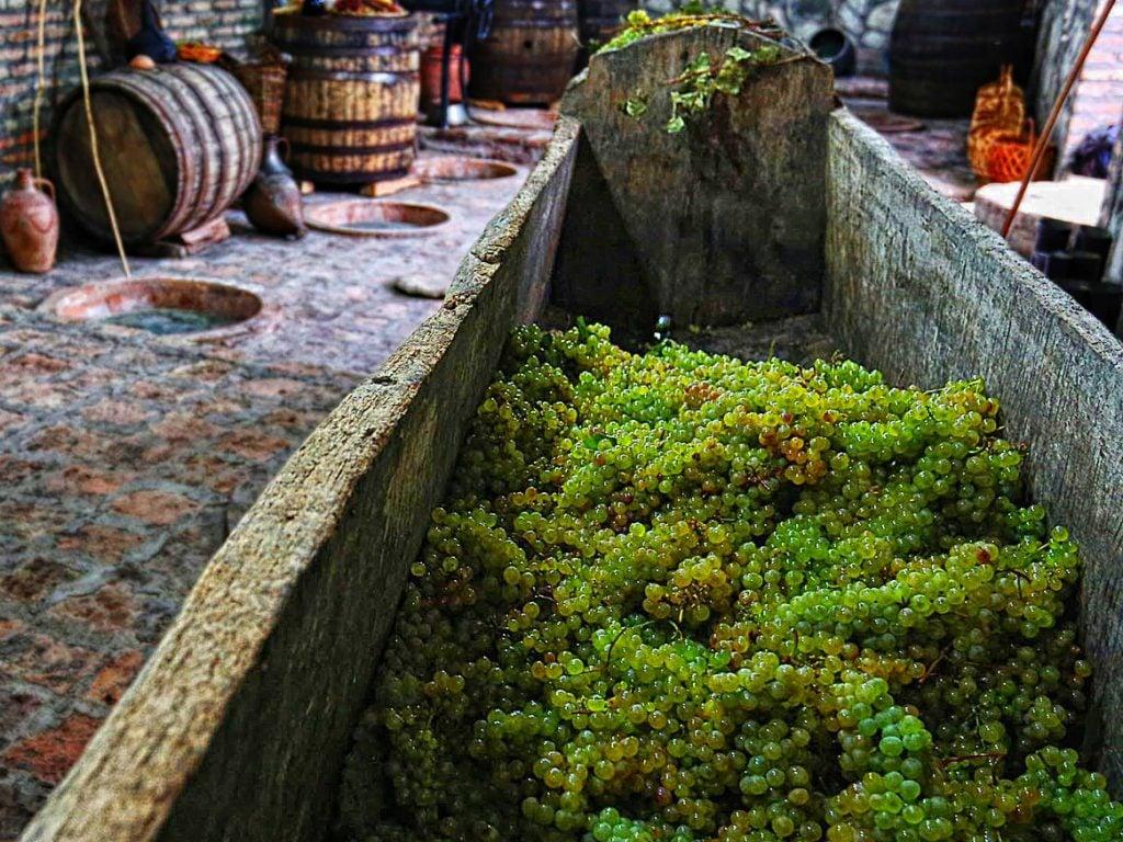 Kakheti Wine Tour Grapes in Satsnakheli squizer