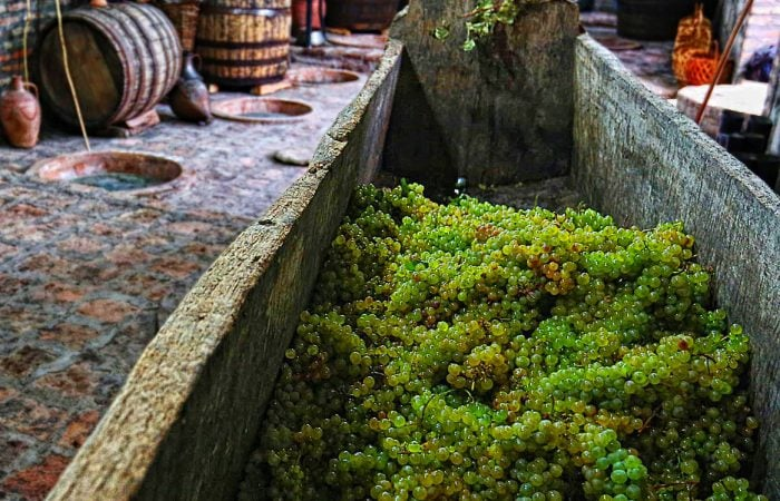 Kakheti Wine Tour Grapes in Satsnakheli squizer