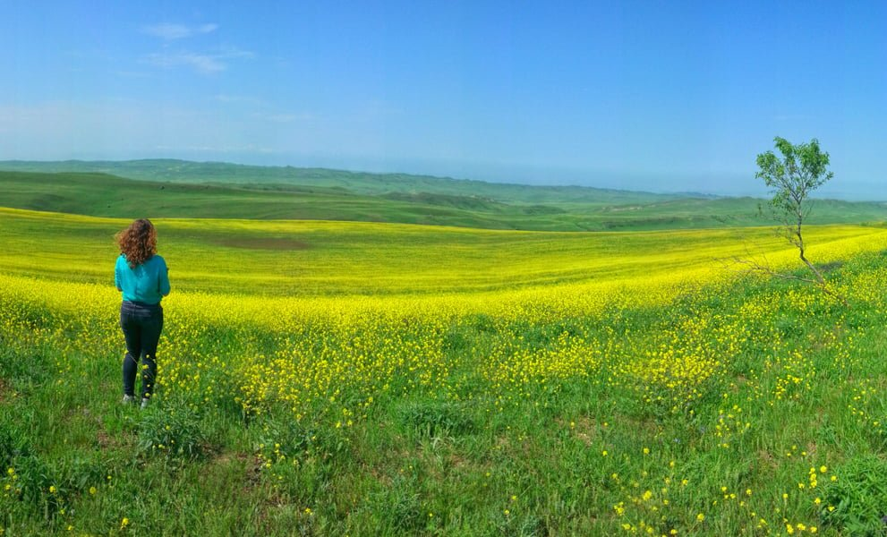 Spring in the Davit Gareja Desert