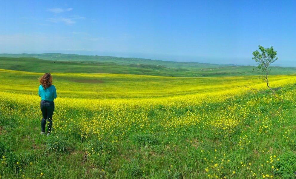 Spring in the Davit Gareja Desert