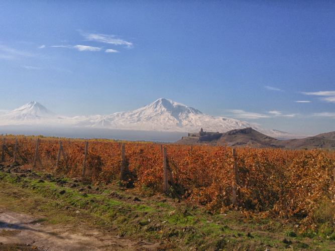 vineyards next to the Khor Virap Monastery and Ararat mountain
